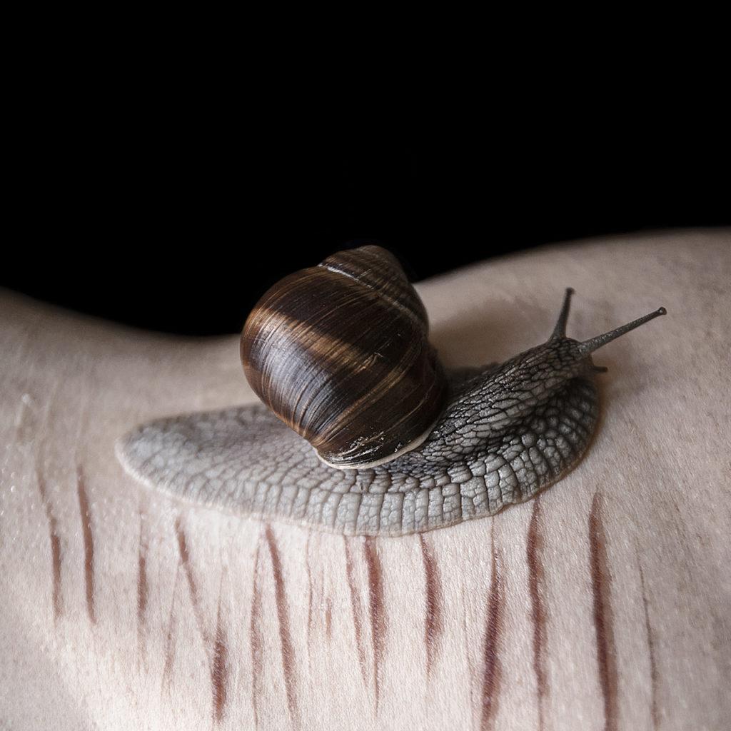 a snail walking on human skin full of cuts